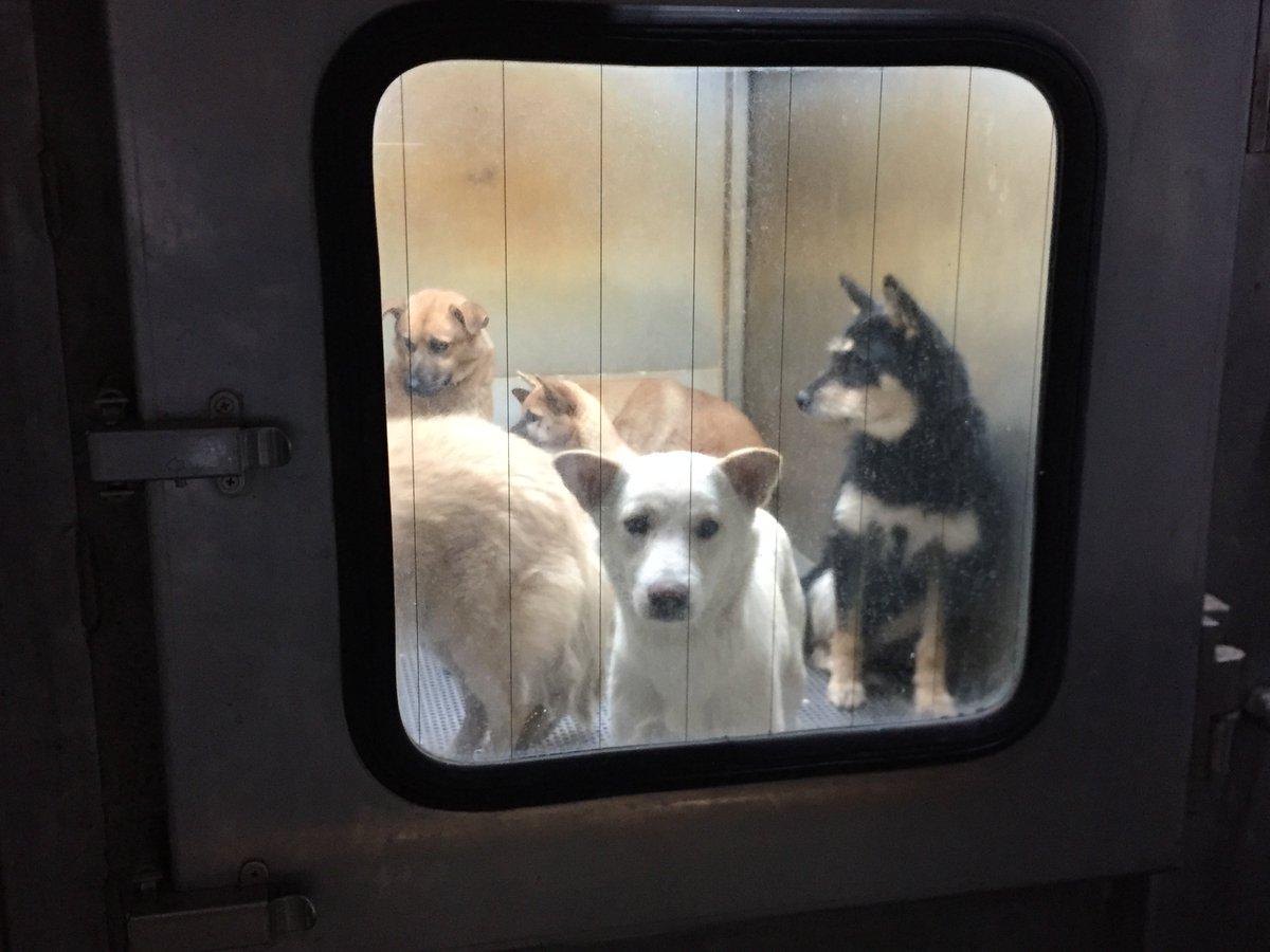 殺処分の光景が忘れられない。ガス室に入れられた犬たちは、このあとバタバタと倒れ、焼却炉に捨てられた。犬や猫の殺処分問題、そしてペットと一緒に入所できる初の老人ホームも紹介しますね。今夜21時のBS-TBS「週刊報道LIFE」。 https://t.co/YDZsm0Jtod