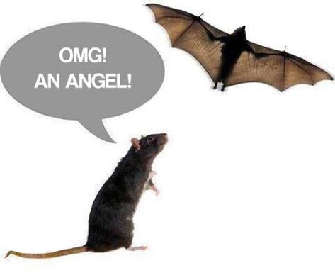 Sunday Funday #Angels #bats #rats https://t.co/fdzyjSS5q3