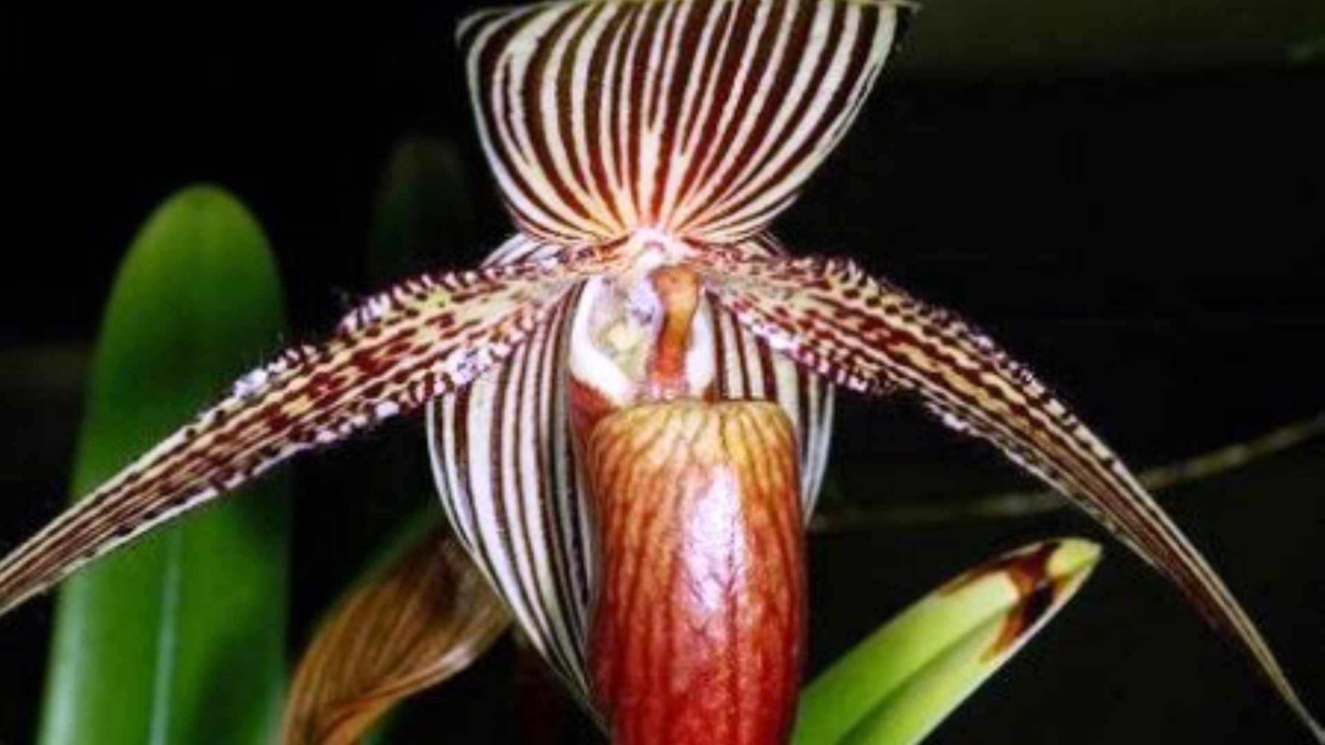 Самой дорогой цветок в мире фото