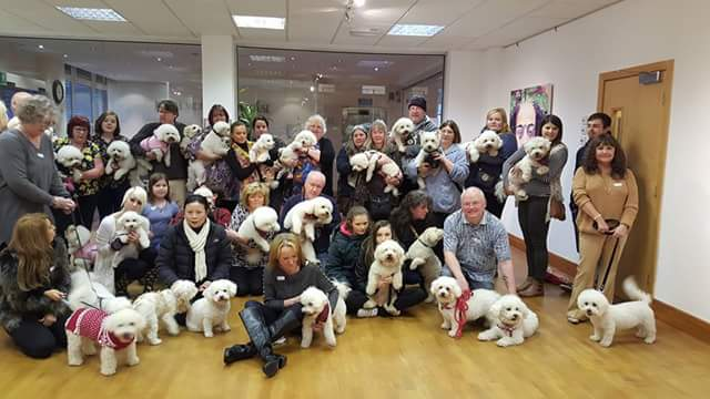 Few of us got together in Middlesbrough today. And yes, Charlie is front centre. #BichonHeaven #BichonFrise #Bichon https://t.co/wJe6KnNjNH