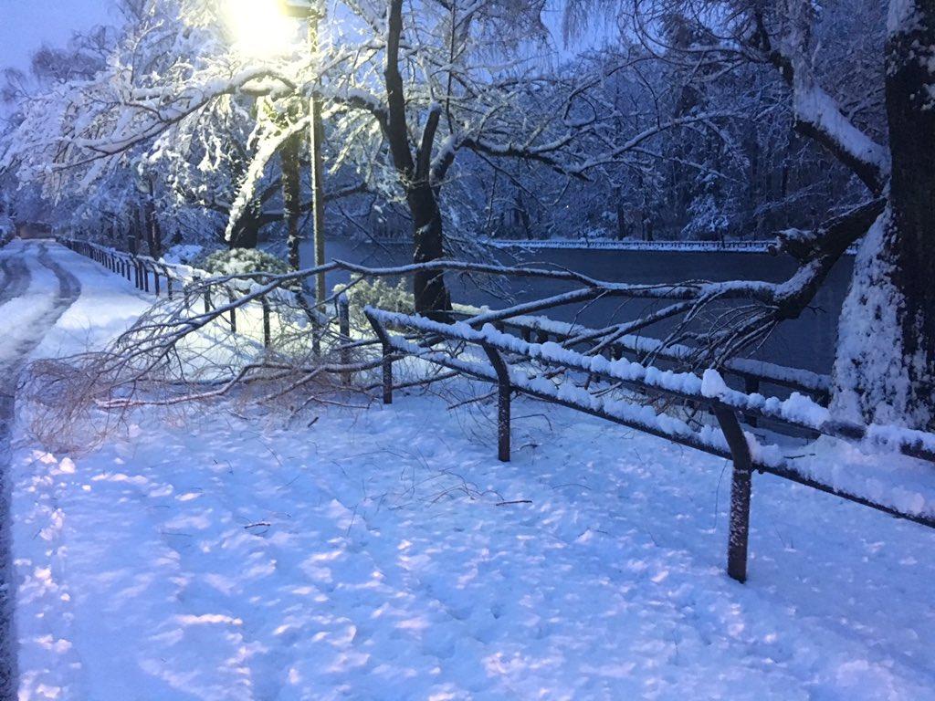 積雪により石神井公園で倒木いくつかと落枝多数。めっちゃ危険です。 https://t.co/hlcMzsum9h