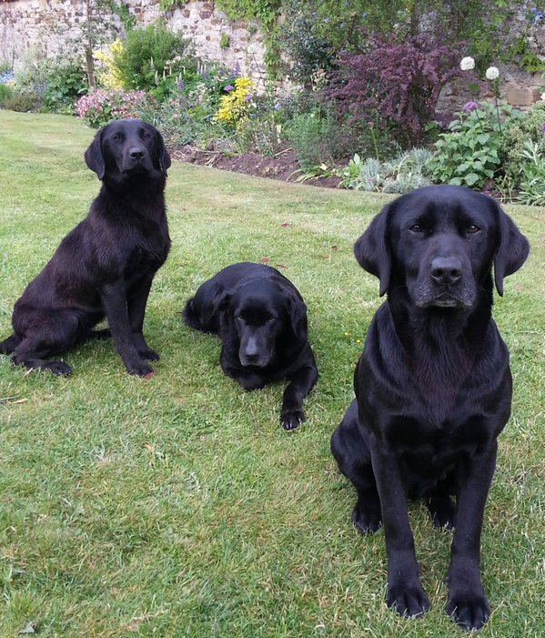 Meet 3 generations of @NFRSFireDogs Millie, Maysie and Willow #woofwoofwednesday https://t.co/1R6kZ9IKqN