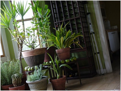 Four Eco-Friendly Ways To Improve Air Quality In Your Home https://t.co/bMj3kjSSd0 #Green https://t.co/pyKxUIhDjG