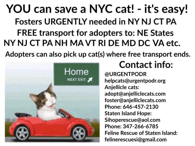The #NYC ACC #cats & #kittens are in #urgent need of fosters & adopters. Free transport available to certain states! https://t.co/LsV3xK2Sek