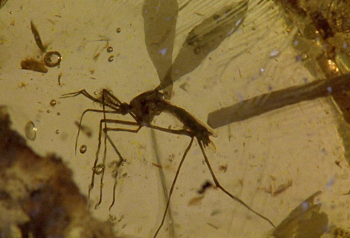 You Won't Believe What the Mosquito from 'Jurassic Park' Looks Like Now https://t.co/YXT9UgxzxM