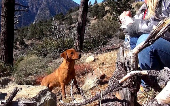Three Dog Sisters Living on Freezing Mountain Rescued - https://t.co/09uwTjWzWY #dogs #rescue https://t.co/nJxYUXYURE