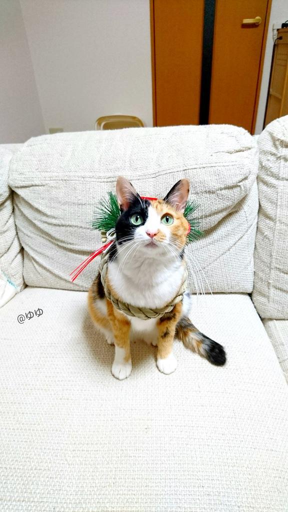 出来心で猫にしめ縄つけたら土佐犬みたいになった……┌