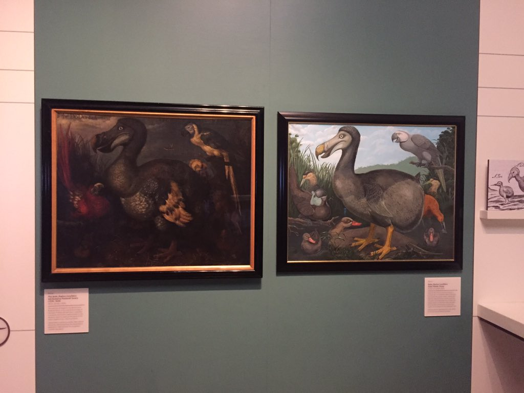 Always loved this side by side comparison of how people drew dodos and what they actually looked like. @NHM_London https://t.co/3h6e9rXOBQ