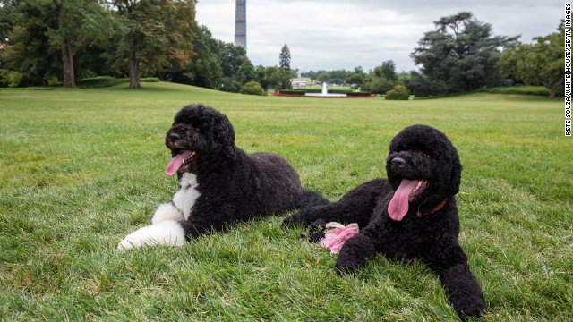 Secret Service: Man claiming to be Jesus planned to kidnap one of the Obama dogs