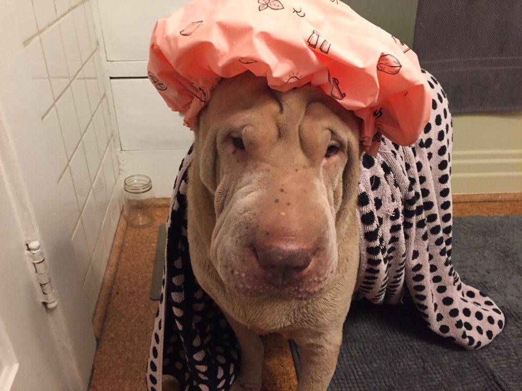2 pic. Just gave Luna a bath ?? JapGYMFBeL