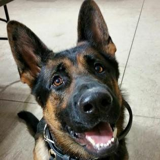 Salute, Jethro. Share your condolences for this hero K-9 who died today. Include #RIPJethro. https://t.co/1ZEPX1p3RV https://t.co/AcyHts85gu