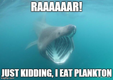 What can memes teach us about #SharkScience ? Please RT! #SciComm https://t.co/DipGOSdRIY https://t.co/LQunriHSn7