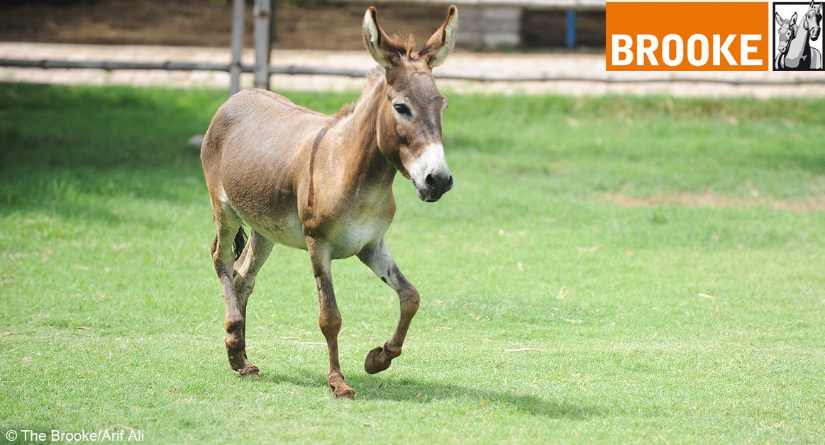The ballot for the @Great_Run is open! Sign up & run to help working horses, donkeys & mules https://t.co/2EBjRcecGL https://t.co/h1bBdMPgk3