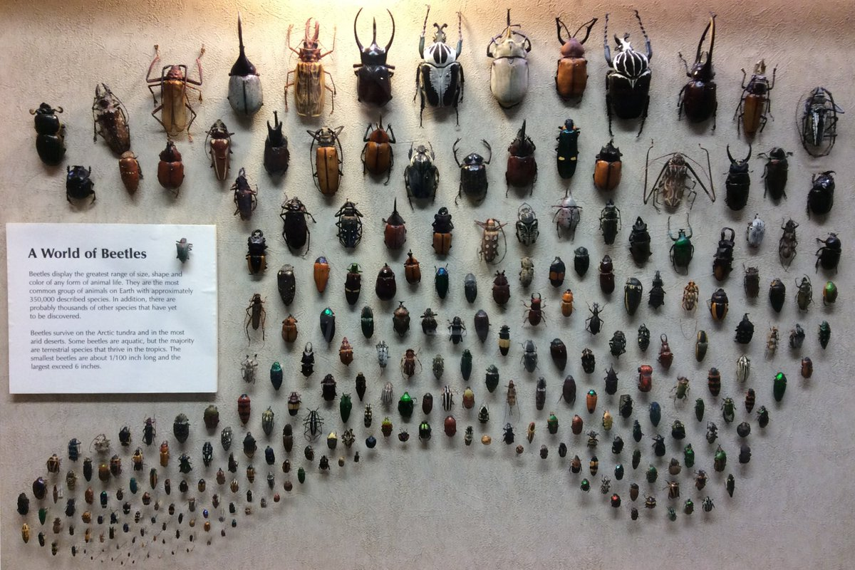 "Our ""A World of Beetles"" display has been getting lots of attention this past week! Can YOU spot the impostor? https://t.co/pVLPDyDWum"