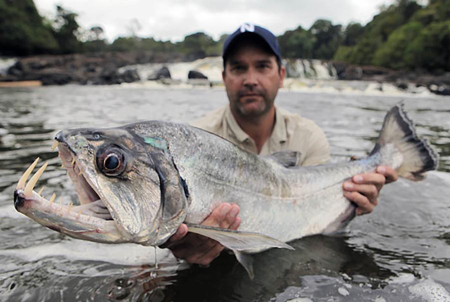 "R Fisheries The payara, or ""v..."