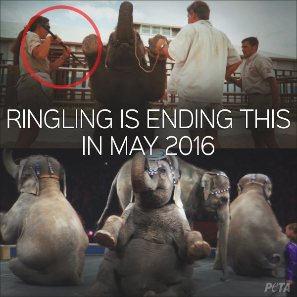 RT @peta: @pamfoundation BREAKING: #RinglingBros pulling elephants off the road early, in May 2016. https://t.co/OTgbBtLDMT https://t.co/gi…