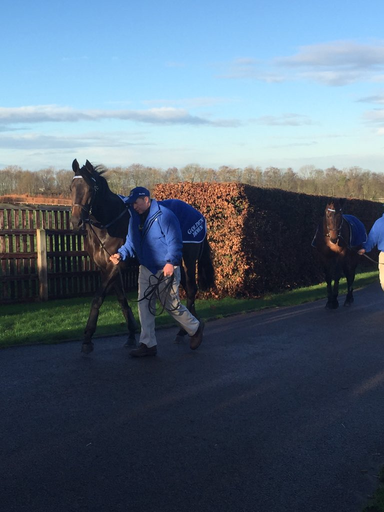 Here he is! Golden Horn leading the string at beautiful Dalham Hall Stud @DarleyStallions @channel4racing https://t.co/rGjsRyy4GB