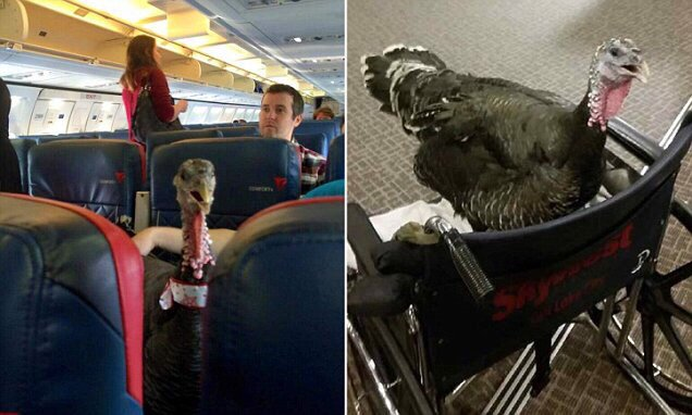 Flight attendant takes photo of TURKEY that passenger had taken on plane https://t.co/WRbVAgUyEz https://t.co/uj4Qn1rwzL