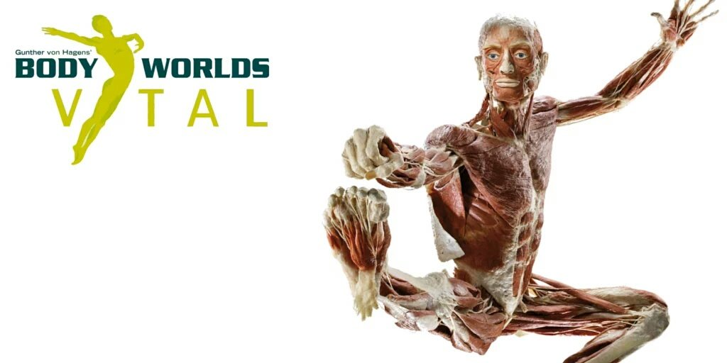 Follow @Crackmacs & RT to win 2 tix to @body_worlds Vital @ @TELUS_Spark https://t.co/QUgGSo6PSl - OPENS JAN 16 #yyc https://t.co/VUMHkcy1qq
