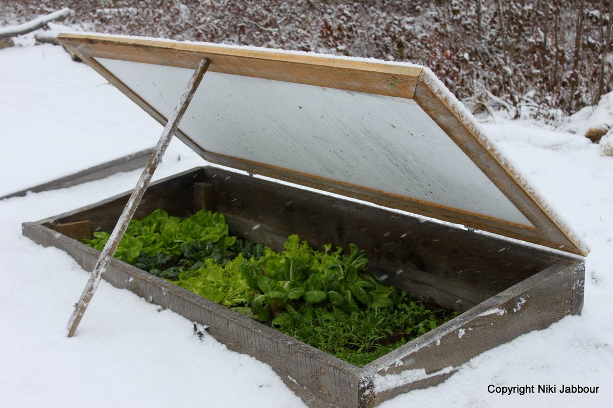 How @NikiJabbour grows food in winter. https://t.co/ft4MT6WCC4 ;) Even in Canada! #gardenchat https://t.co/E7hN3EmPrq