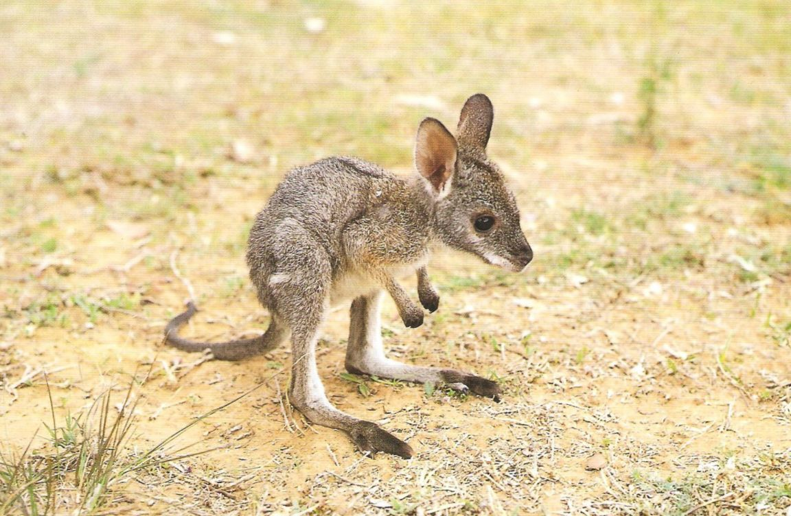 So sad. A tiny joey pauses to imagine a free Europe, undivided by racial tension and political ideology. https://t.co/uB4luBHue3