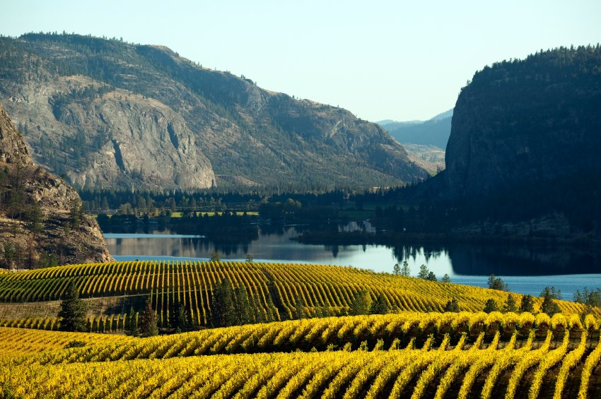 Thinking about a winecation this year #America? Safe, Affordable and Spectacular—BC's Okanagan Valley https://t.co/lV54p8Egon