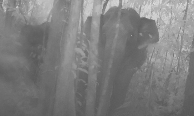 RT @Greenpeace: Rare footage of of #elephants in Cambodia brings new hope for the species' survival. https://t.co/0oox4fJN2G https://t.co/L…
