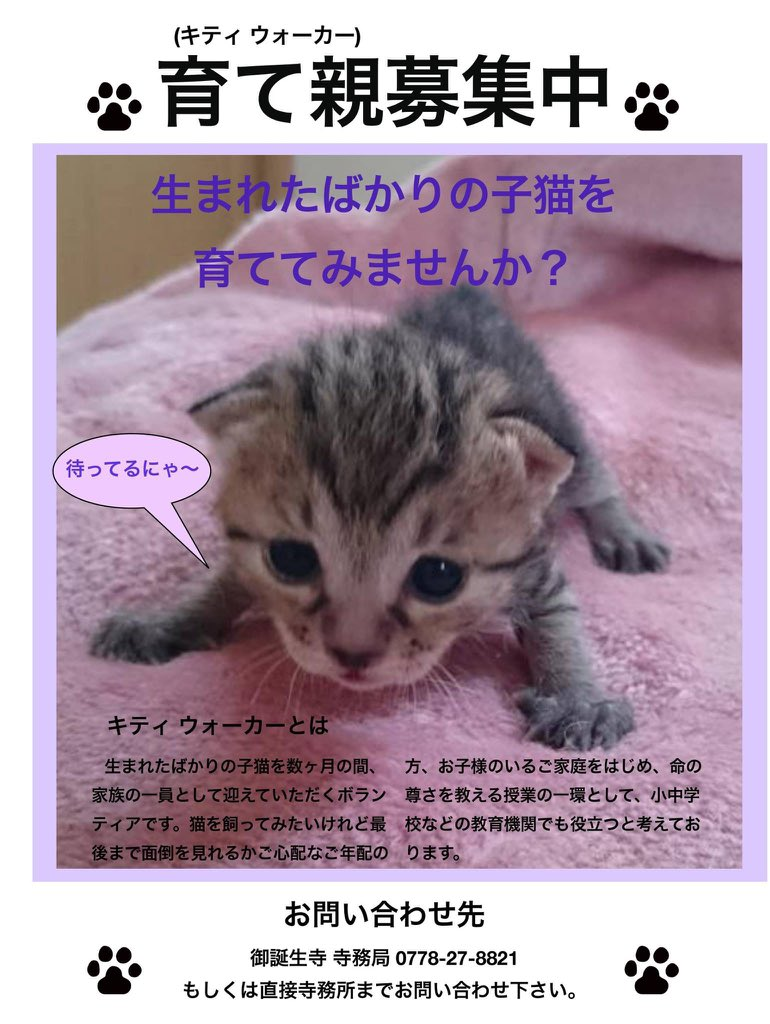 訪れてみたい。 暖かくなったらバイクで行ってみようかな。  RT @Happy9taro: 猫寺として有名な福井県の御誕生寺さんより、ミルクボランティアの募集です。拡散希望だそうです。#猫寺#ミルクボランティア#御誕生寺 https://t.co/XD3J0QBJ4G