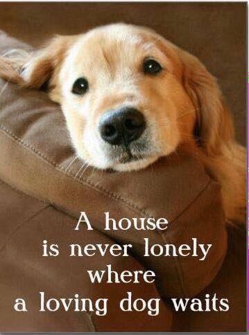 So true! #adoptdontshop #doglover #dog #goldenretriever https://t.co/aghM3XYRSY