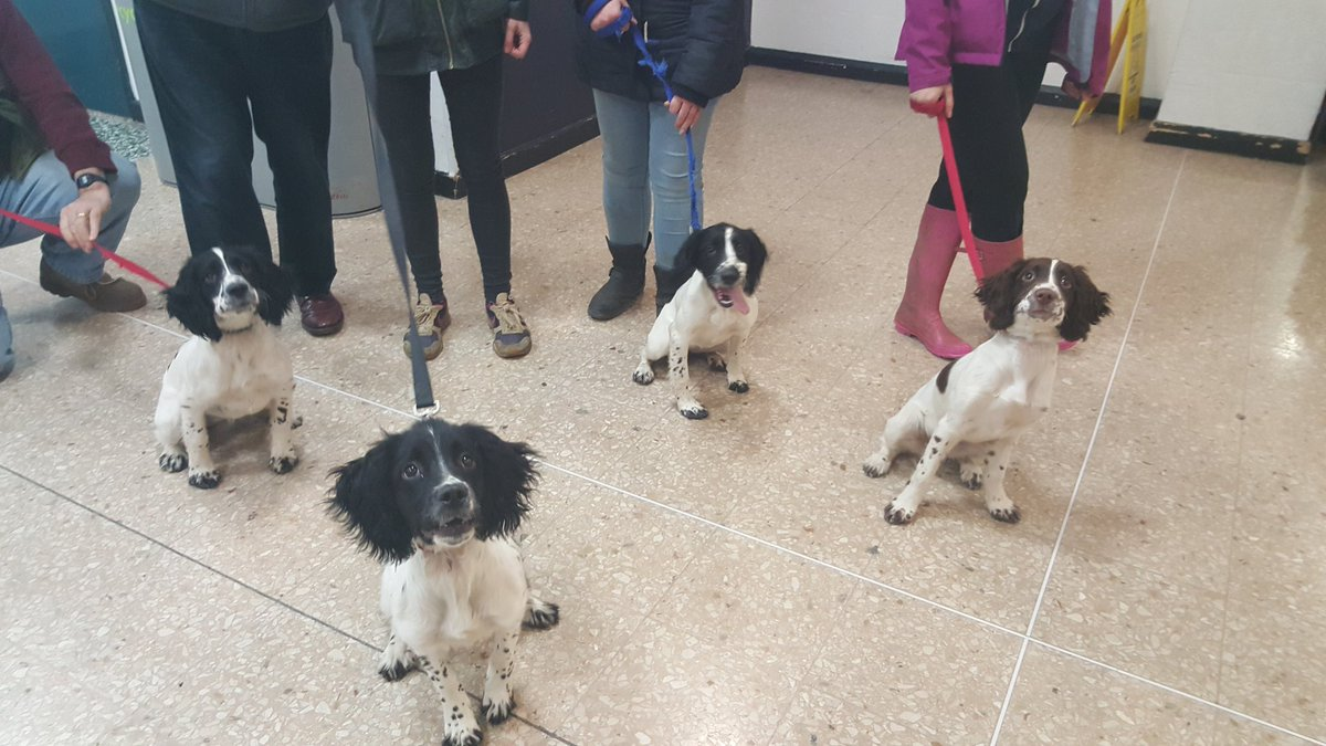 Did you see the @WMPDogs unit puppies in training at #bhx this morning? They were so adorable!! https://t.co/cJXsltNKt9