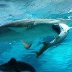 A female shark in a Seoul aquarium didnt like a male shark bumping into her. So she ate him https://t.co/HJyUaZZDZy https://t.co/0jyz7rLEAh