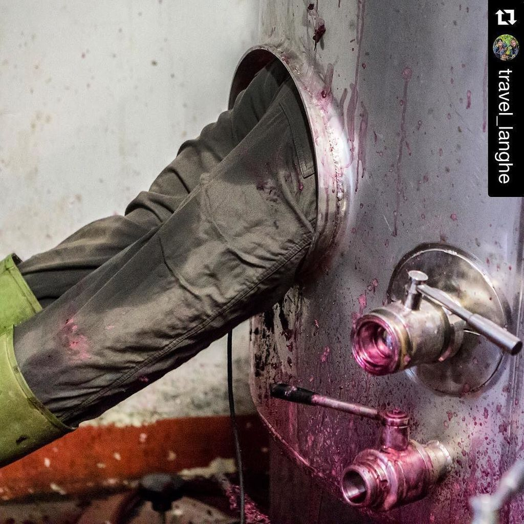 Such glamorous work in wine.... #Repost @travel_langhe ・・・ I'm glad that's not my job at #… https://t.co/iBNSfkRqFT https://t.co/EwMHn92k3P
