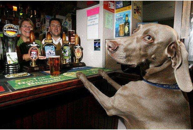The ultimate guide to dog friendly pubs in Tunbridge Wells https://t.co/1klnlMPtLr #TunbridgeWells https://t.co/vgbmgU8mDu