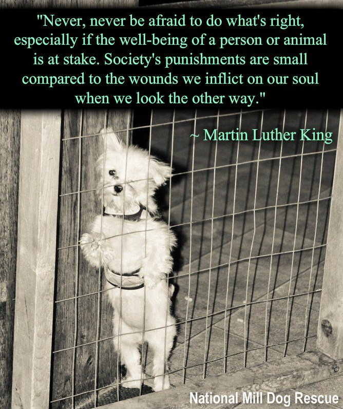 """""""Never, never be afraid to do what's right...."""" #MLKDay #MLKDay2016 #MLK #puppymills https://t.co/a68ncLuemO"""