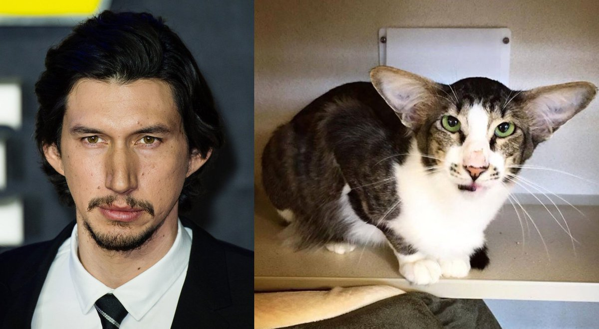 Is this the cat version of #StarWars' Adam Driver? https://t.co/xmEwcuzgsm https://t.co/t2Vkscsiuh