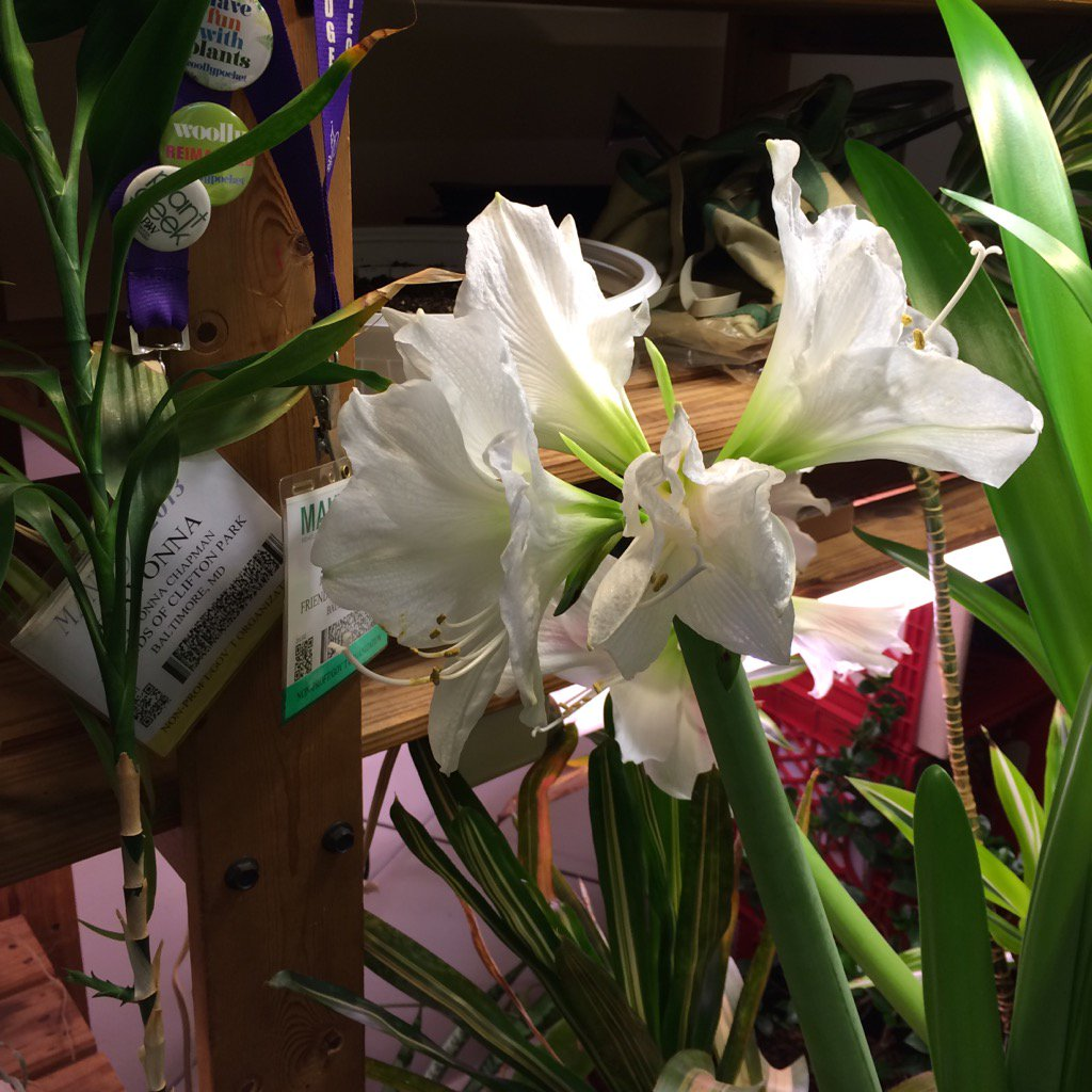 #plantchat. The glory of my winter indoor garden. https://t.co/AZViebaTvC