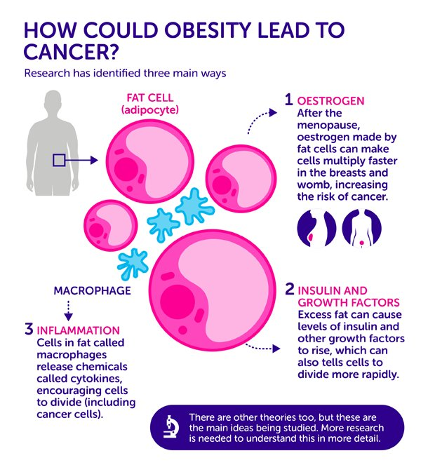 How Does #Obesity Cause #Cancer? Three Leading Theories - https://t.co/2JK2OQDUxf https://t.co/Tmt0NAuXfZ