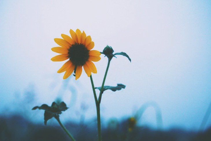 RT @hitRECord: .@figgynixon from Texas snapped this gorgeous shot of a sunflower: https://t.co/prcmsHlN8u. What can you capture? https://t.…