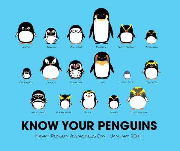 It's #PenguinAwarenessDay! WoooooHooooo! https://t.co/EC8PMh6WlN