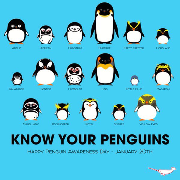 #penguinawarenessday ..... Know your penguins. https://t.co/BlXv0ef0Ii