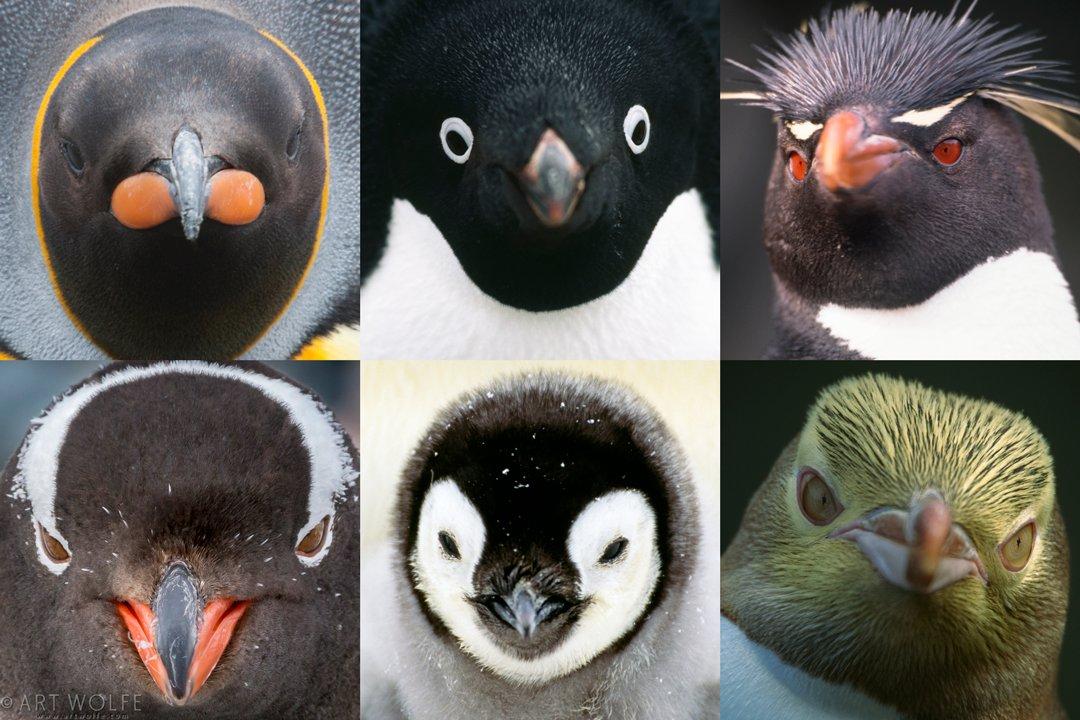 Penguin Health Equals Ocean Health #penguinawarenessday https://t.co/PG7qKUbFqh https://t.co/HSvJbeoDzG