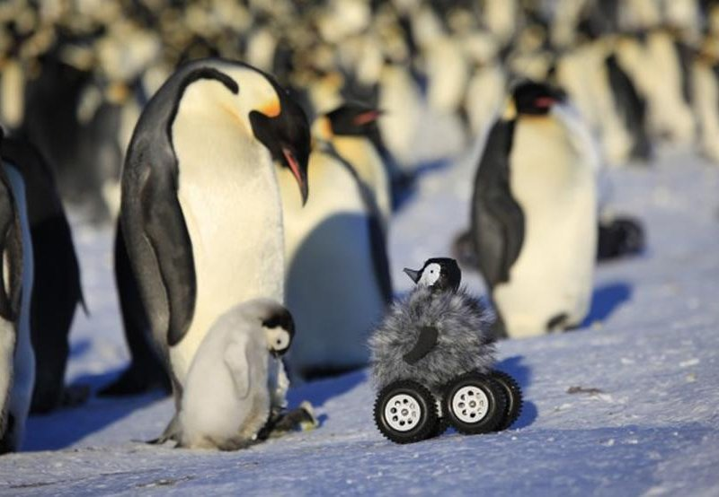 Rovers disguised as baby penguins quietly infiltrate penguin colonies. #PenguinAwarenessDay https://t.co/ywXXj03eOg https://t.co/xUITOLTk8F