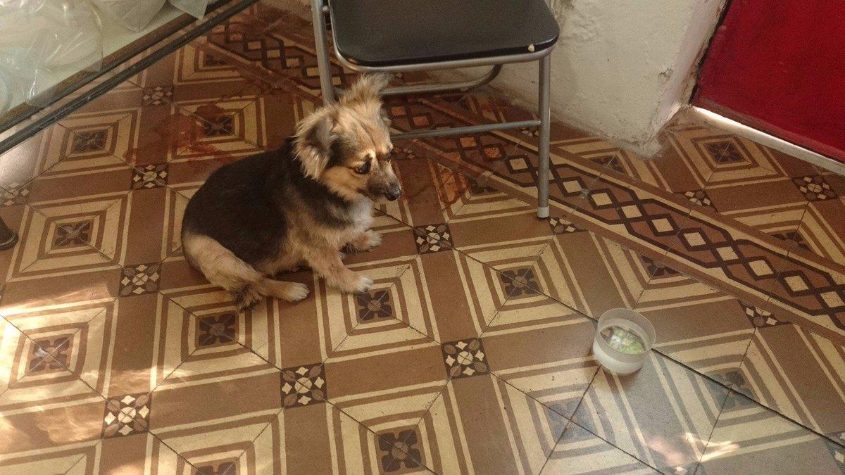 X favor Rt encontrada en Gaona y Espinosa. Collar rojo, muy educada y mansa. At Caballito, Paternal y Villa Crespo. https://t.co/Q5qnJI4LIz