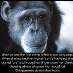 .@IBM The #Chimps #NYBC Has Killed R More Human Than The NYBC Board! Stop Sponsoring NYBC +Feed Chimps #BoycottNYBC https://t.co/MsKrfV9zwu