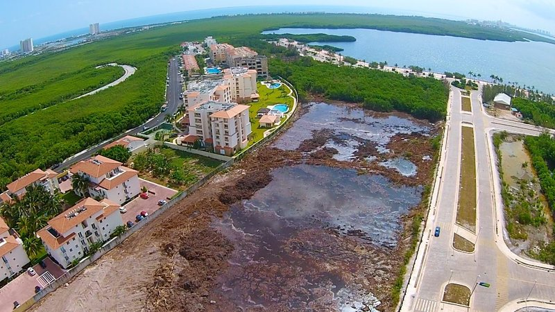 NO a la destrucción del manglar en Cancún  #SalvemosTajamar Únete https://t.co/OtALymnhya