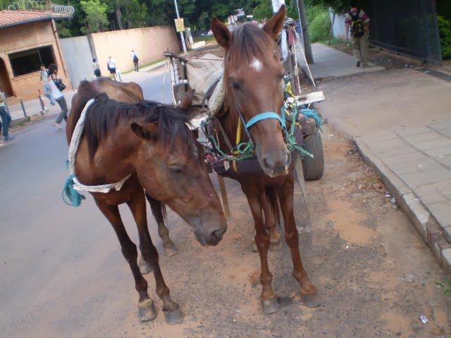 #SabíasQue… el 80 por ciento de la basura en la Ciudad de México se colecta con caballos https://t.co/H8lnwwhn82 https://t.co/oEcHCgm4FQ