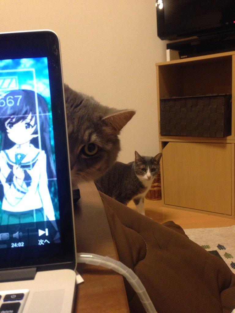 ガルパン観てるのを猫に監視されている https://t.co/U0P19Uke2l