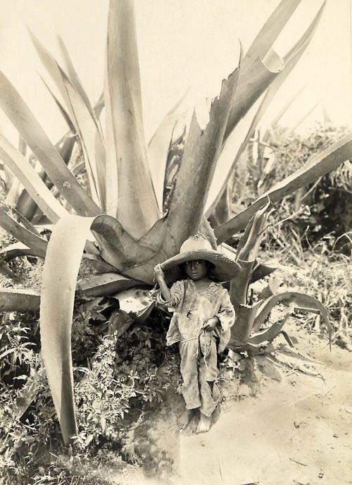 El Niño y el agave. Azcapotzalco,  México 1916 #MéxicodelRecuerdo cc @hdemauleon https://t.co/uM2FOGOU8c