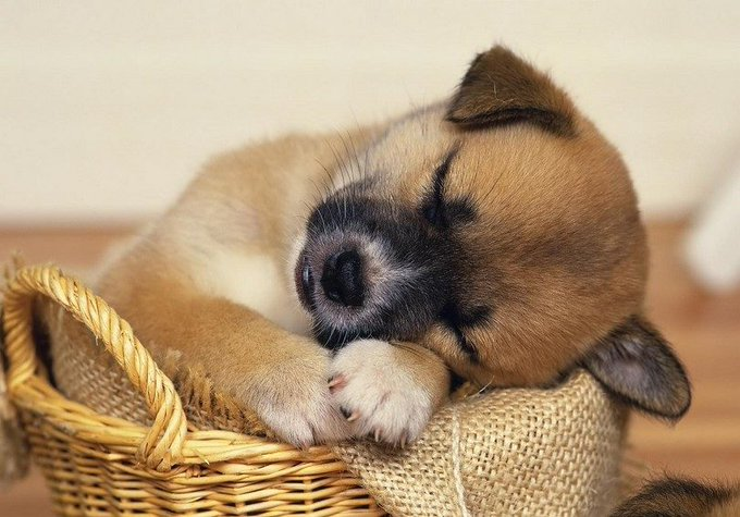 @EmergencyPuppy: RT @EmergencyPuppy: It's OK to take a break if you need it. https://t.co/YrZcAtvesK