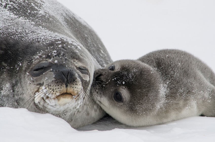 RT @peta2: When you don't wear fur, mother & baby seals get to live peacefully together ???? #FurFree https://t.co/IcEwu8KN4m